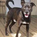 Adoptable (Official) Georgia Dogs for March 9, 2020