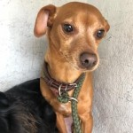 Adoptable (Official) Georgia Dogs for April 8, 2020