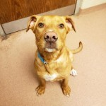 Adoptable (Official) Georgia Dogs for April 22, 2020