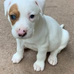 Adoptable (Official) Georgia Dogs for May 6, 2020