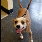 Adoptable (Official) Georgia Dogs for September 23, 2020