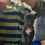 Adoptable (Official) Georgia Dogs for October 13, 2020
