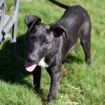 Adoptable (Official) Georgia Dogs for November 16, 2020