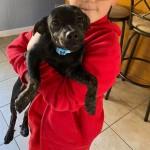 Adoptable (Official) Georgia Dogs for November 17, 2020