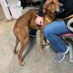 Adoptable (Official) Georgia Dogs for December 23, 2020