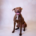 Adoptable (Official) Georgia Dogs for December 16, 2020