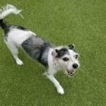 Adoptable (Official) Georgia Dogs for December 10, 2020