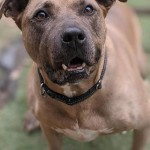 Adoptable (Official) Georgia Dogs for January 13, 2021