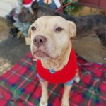 Adoptable (Official) Georgia Dogs for February 2, 2021
