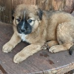 Adoptable (Official) Georgia Dogs for February 22, 2021