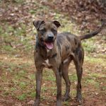 Adoptable (Official) Georgia Dogs for April 13, 2021