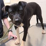 Adoptable (Official) Georgia Dogs for June 3, 2021