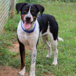 Adoptable (Official) Georgia Dogs for September 21, 2021